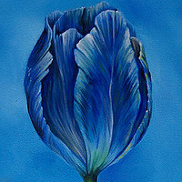 Oil painting Blutulip by Richard Mountford