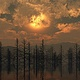 trees-sunset-flood by John  Douglas