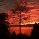 Sunset-Tree_08-2_SM by John  Douglas