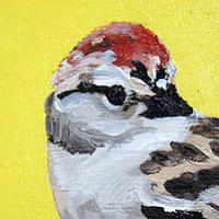 Telephone Line Chipping Sparrows Detail  by Belinda Harrow