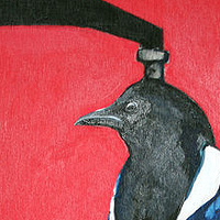 Power Line Common Magpie Detail  by Belinda Harrow