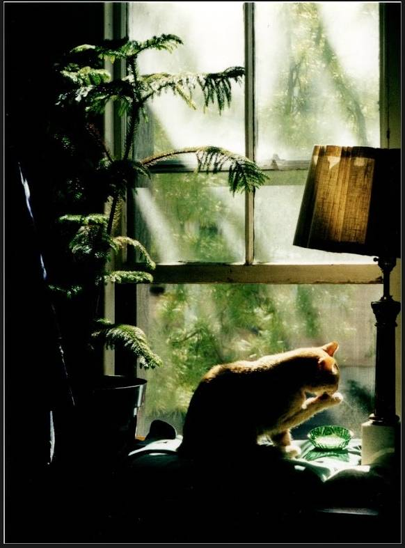 Cat in Green Window by Anastasia O'melveny