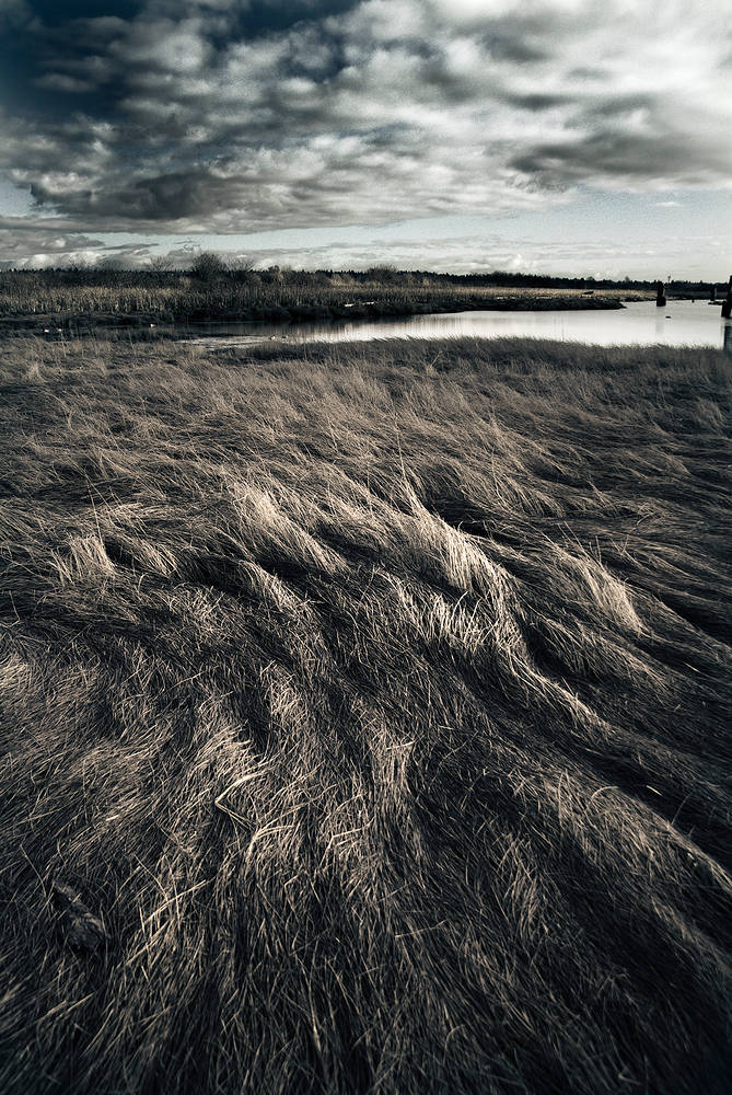 Iona Grass 2 by Jim Friesen