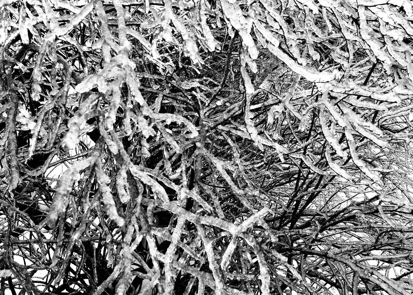 ice storm_08 by John  Douglas