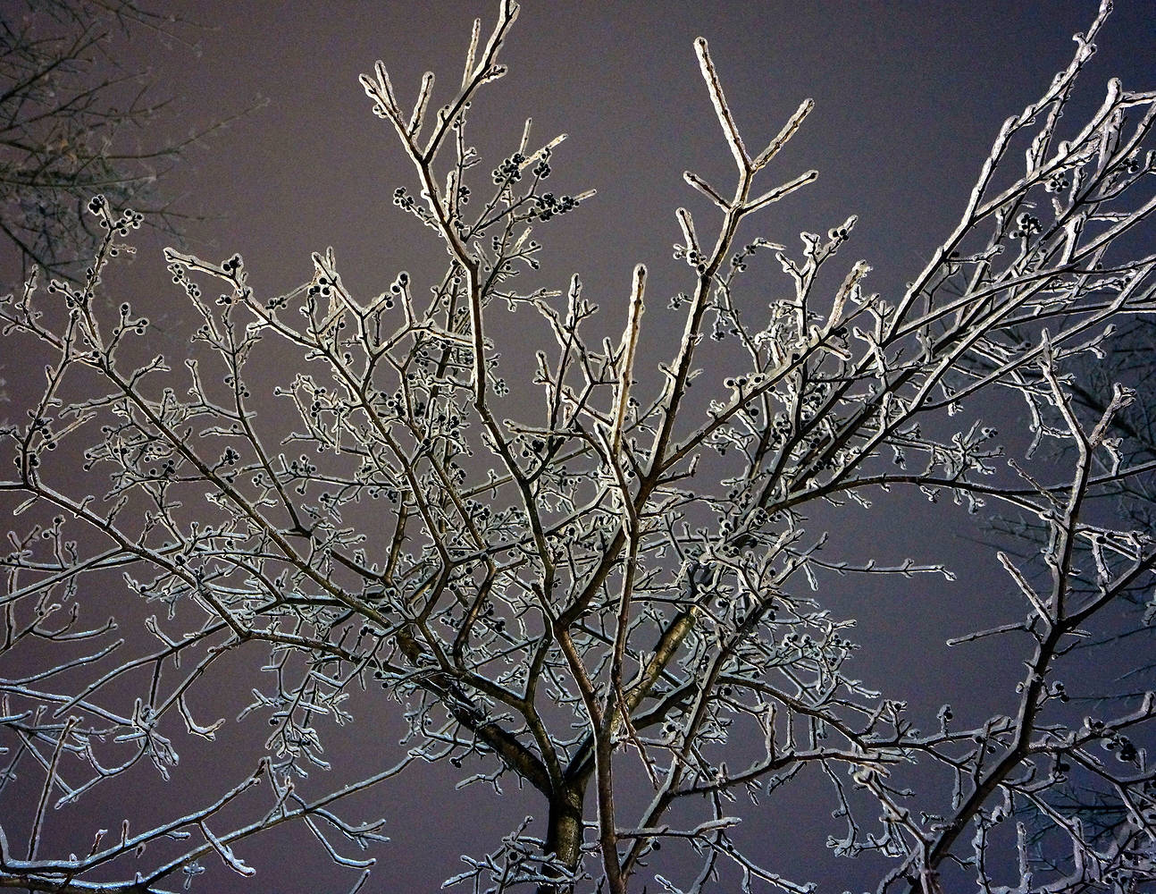 ice storm_14 by John  Douglas