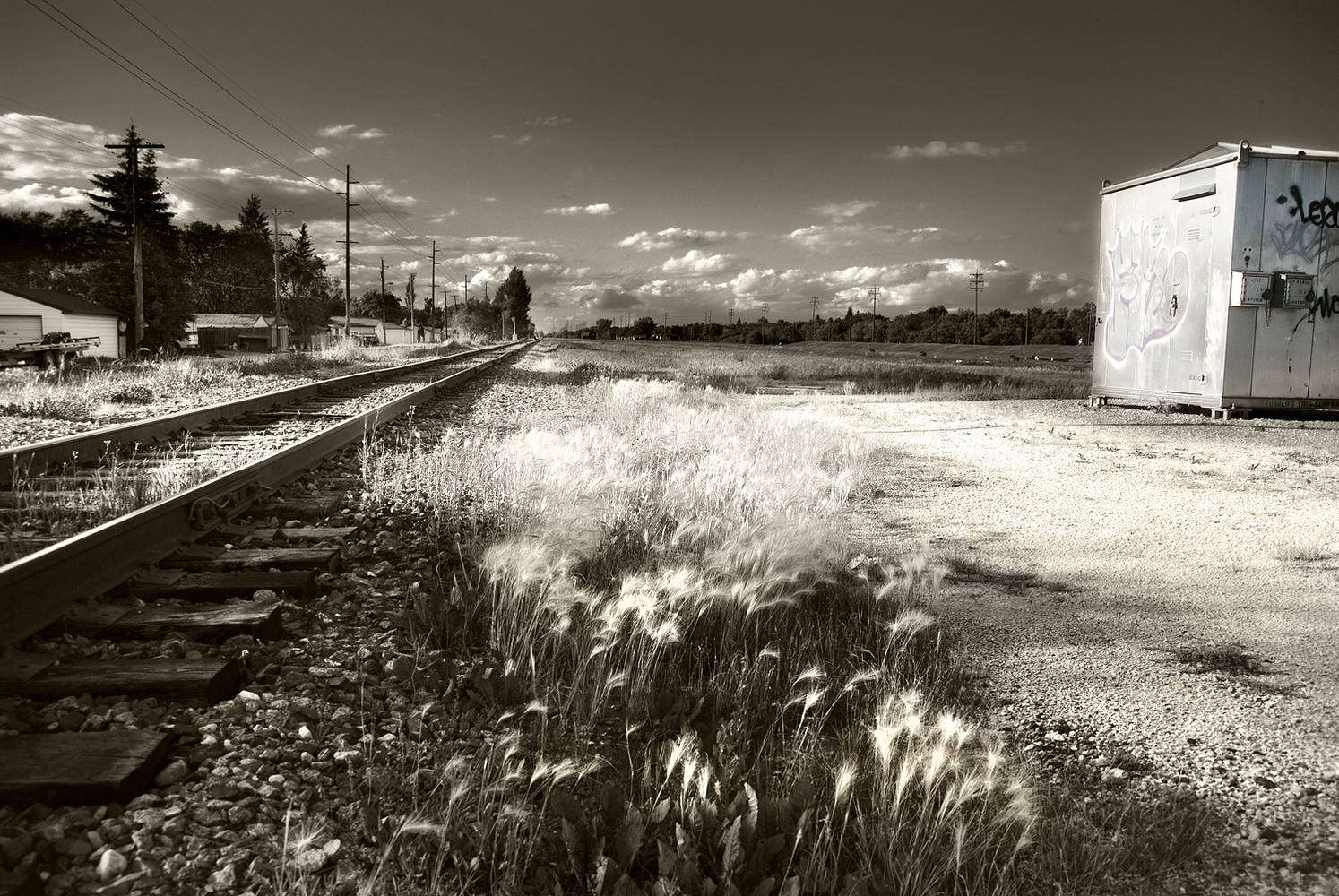 Railway tracks & Foxtails by Jim Friesen