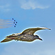 GULL FORMATION by Joeann Edmonds-Matthew