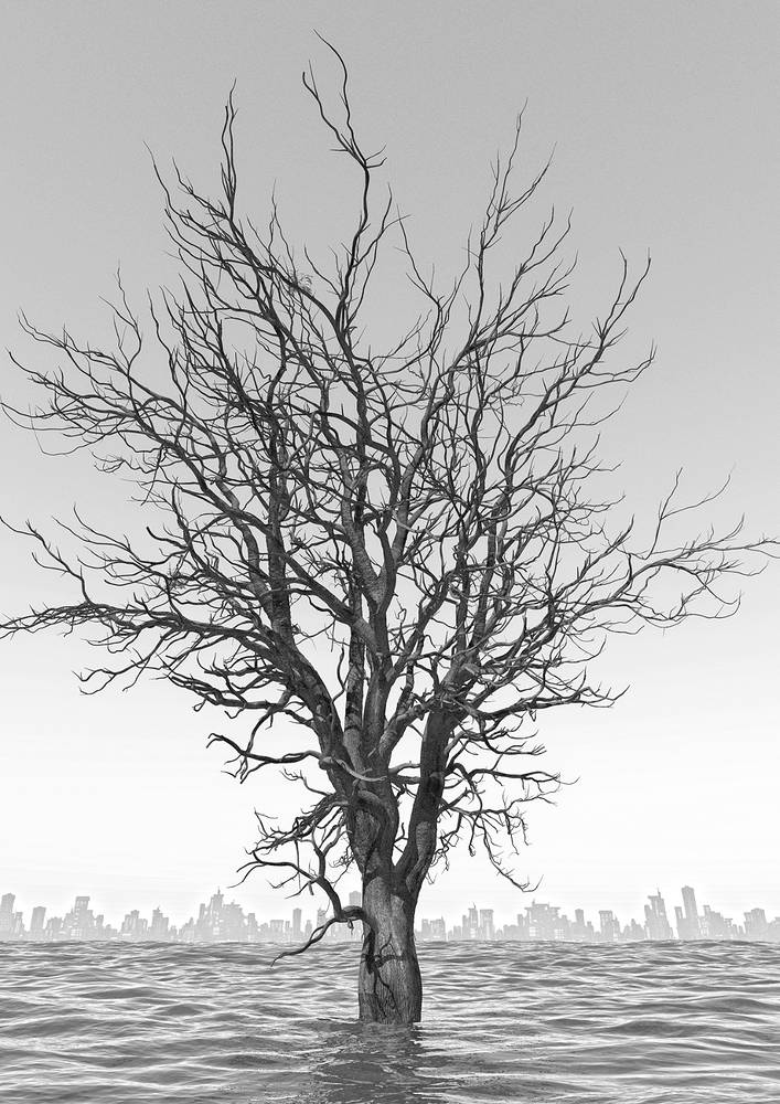 _CITY-A-tree8BW2sm by John  Douglas