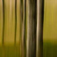 Trees 5 by Jim Friesen