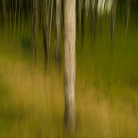 Trees 2 by Jim Friesen