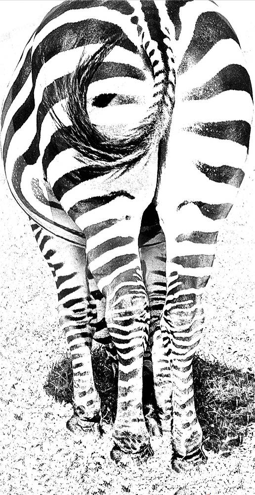 ZEBRA WINK by Joeann Edmonds-Matthew