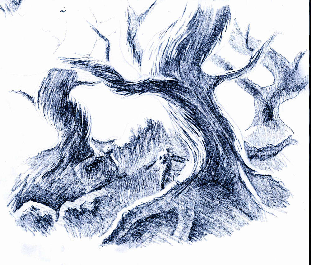 Drawing Fangorn by Hendrik Gericke