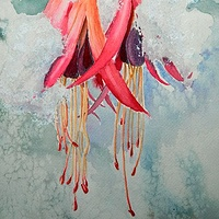 Watercolor Fuschia with Snow by Jane Crosby
