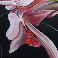 Oil painting Moth Orchid III by Robert Porazinski