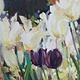 Oil painting White and Purple Tulips by Susette Gertsch