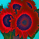 Print RED HOT SUN FLOWERS-Digital Play Ground by Joeann Edmonds-Matthew
