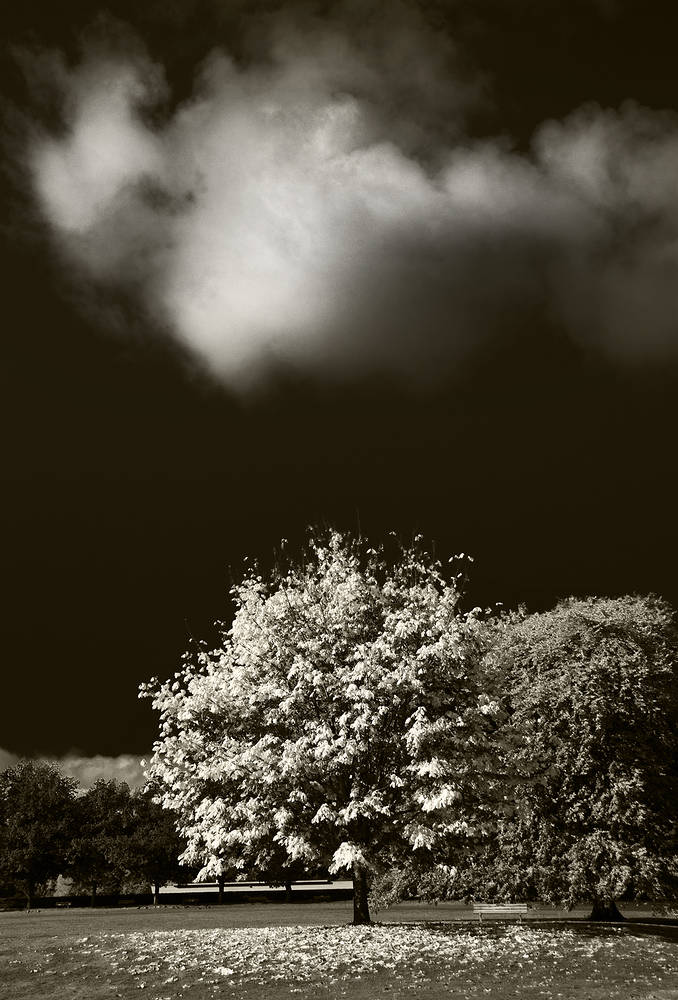 Tree & Cloud by Jim Friesen