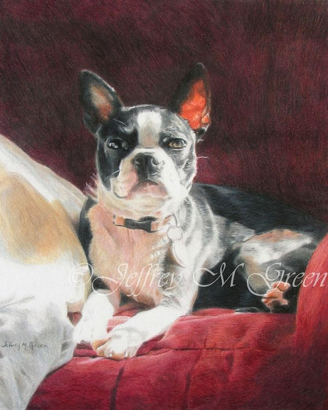 "© Jeffrey M Green. Pet Portrait. ""Kiwi"", 8"" x 10"", colored pencils.  by Jeffrey Green"