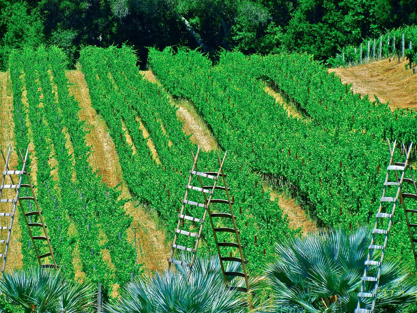 LADDERS AND VINES by Joeann Edmonds-Matthew