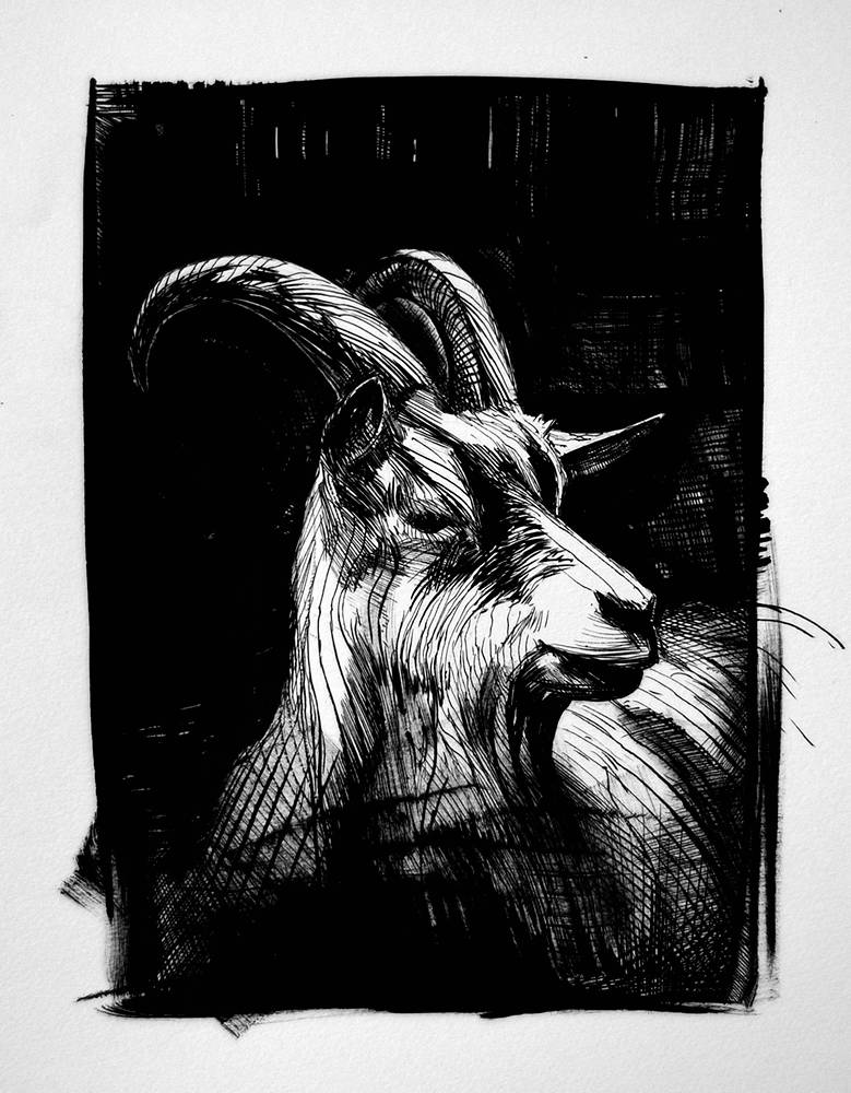 Drawing Goat by Hendrik Gericke