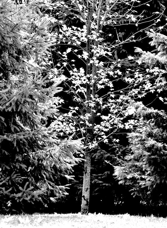 No.35 last leaves B&W copy by Jacqueline Janecke
