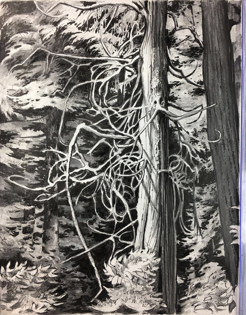 A pencil drawing of a tree