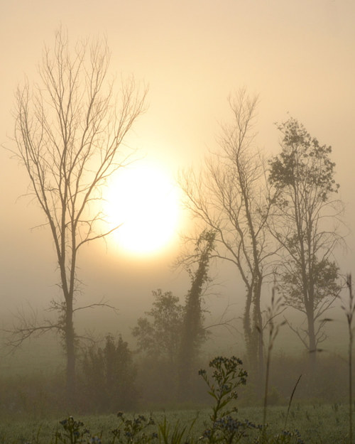 A photo of trees and diffuse sunlight in the mist