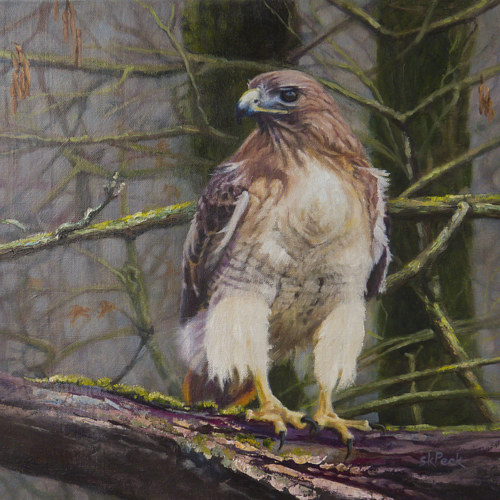 A painting of a falcon sitting on a forest branch