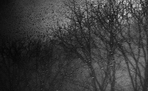 A black and white photo of trees seen through a rainy window