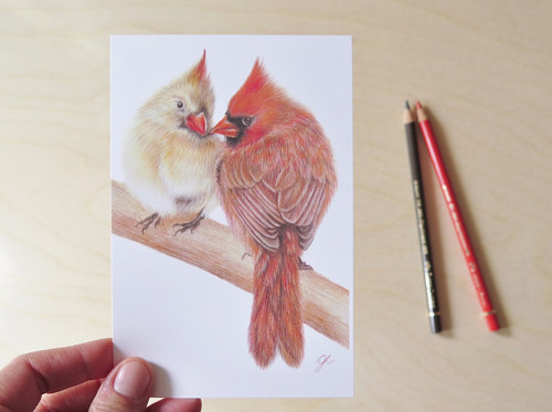 A print of a drawing of two cardinals