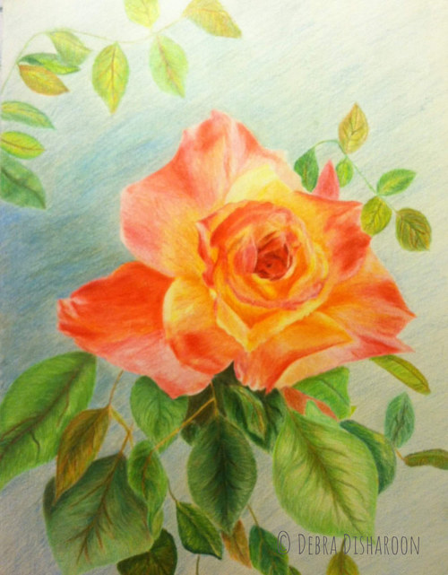 A coloured pencil drawing of an orange rose