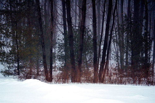 A photo of a dark forest in the snow