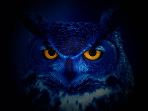 dark blue photo of an owl with bright yellow eyes