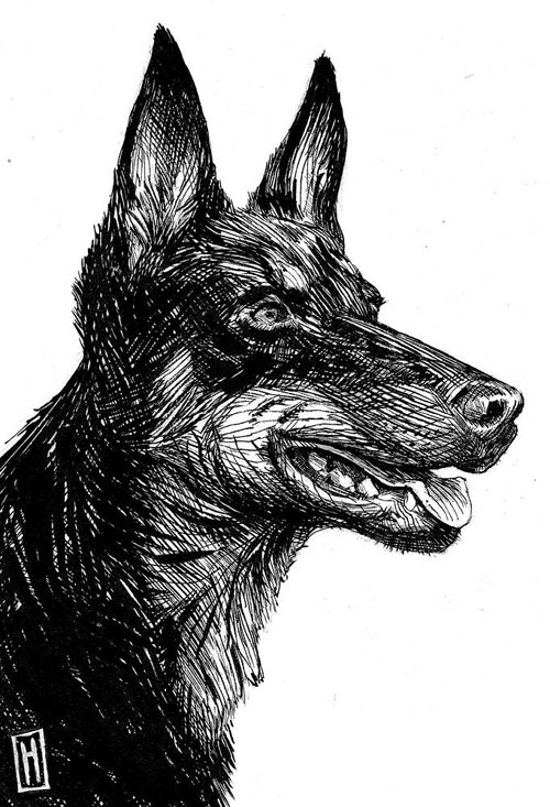 black ink drawing of a dog's head