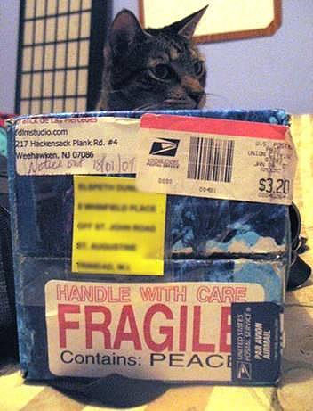 A photo of one of the peace boxes in front of a cat