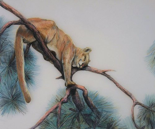 A drawing of a mountain lion napping in a tree