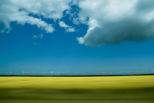 a photo taken out the window of a car while driving through canola fields