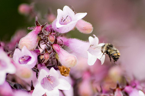 Soft photo of bees closeup