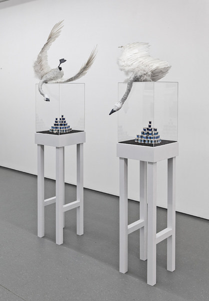 A sculpture consisting of two taxidermy swans atop glass vitrines