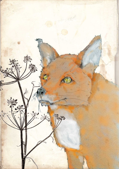 A drawing of a fox on a cream-coloured background