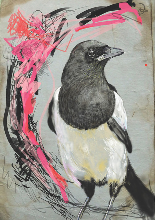 A drawing of a magpie on a black and pink background