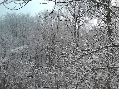 A photo of some tree branches covered in snow