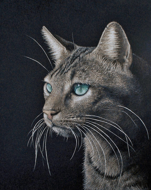 A realistic drawing of a cat on a black background