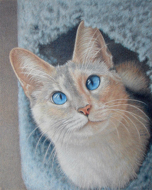 A coloured pencil drawing of an orange cat with blue eyes