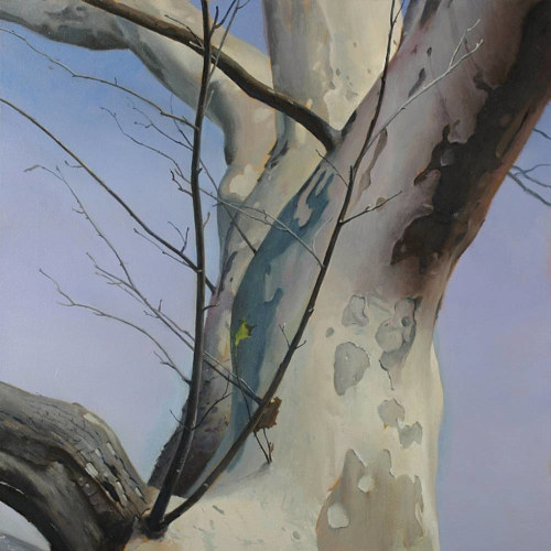 A painting of a birch tree viewed at an upward angle