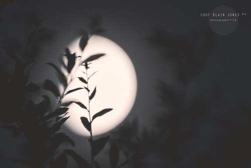 A soft focus photo of the moon behind a plant