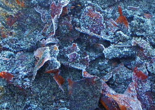 A close-up photo of some frost on the ground