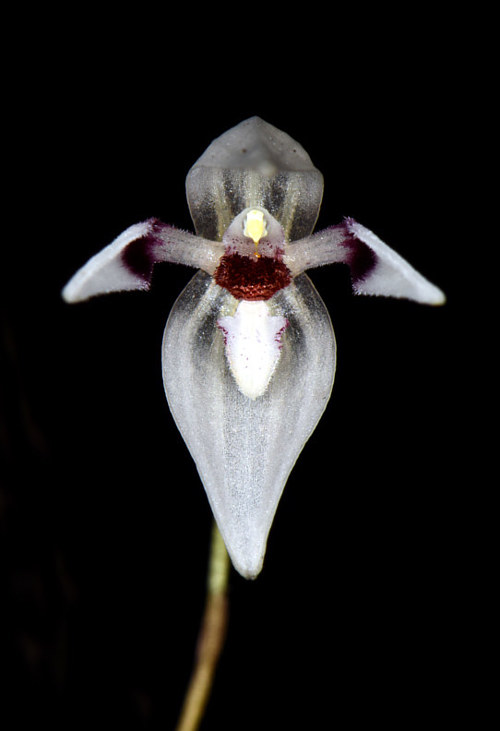 A photograph of a white orchid