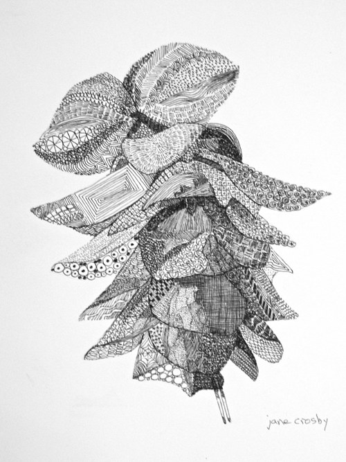 An ink drawing of an oregano plant