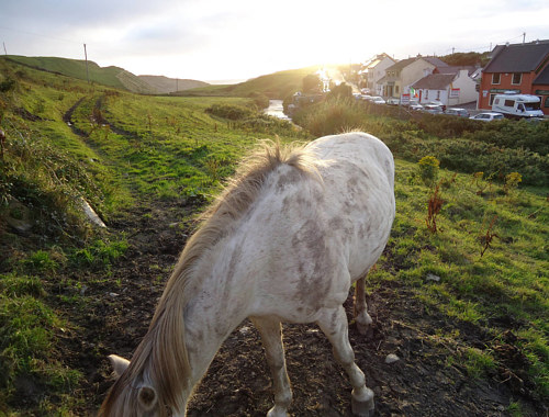 A photo of a horse grazing in Ireland